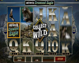 Untamed Crowned Eagle Slot Screenshot