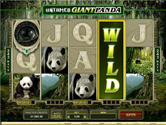 Untamed Giant Panda Slot Screenshot